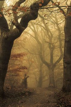 Foggy forest, as from a fairy tale. Gloomy, dark, enchanting old mighty trees.Foggy forest, as … Forest Path, Tree Forest, Dark Forest, Foggy Forest, Fairy Tale Forest, Misty Forest, Creation Image, Landscape Photography, Nature Photography