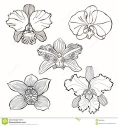 orchid draw - Buscar con Google