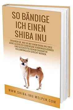 Erfahre alles über die Shiba Inu Rasse