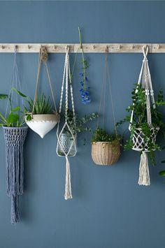 Des plantes d'intérieur suspendues sur un mur foncé