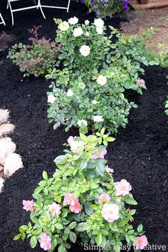 SUMMER CARE TIPS FOR ROSES    Keep Your Roses Blooming And Thriving All  Summer With These Easy Tips!