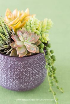 Find out how to choose the best pot for your succulents