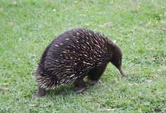 unusual australian wildlife pics | Native Australian Wildlife - Wombat - Oprah.com