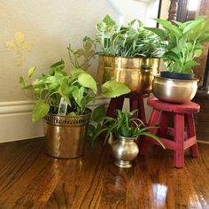 Why stick to same #old #terracotas for plants? How about #brass for a change.