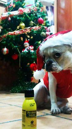 Las mayores trastadas perrunas tienen premio en SrPerro :-) Lola es fan del Betadine... ¡qué peligro! http://www.srperro.com/blog_perro/las-travesuras-perrunas-que-mas-nos-han-hecho-reir-gracias-por-ser-trastos-caninos-tan-ge