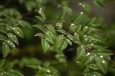 Las plantas de nuestro jardín rociadas con agua de la lluvia.