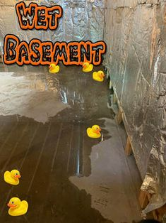FAZIO WATERPROOFING Basement waterproofing services in Albany, & Schenectady, NY. Solutions for wet leaky basement water problems. We fix leaking basement walls and floors. Contact us for interior and exterior basement leak repair. Leaky Basement, Basement Repair, Damp Basement, Flooded Basement, Basement Flooring, Basement Waterproofing, Window Well Installation, Sump Pump Replacement, Sump Pump Drainage
