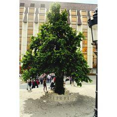 Quest'albero ha catturato la mia vista in quel di #budapest nei pressi del #bastionedeipescatori. Lo condivido con voi augurandovi #HappySunday  #ridieassapori #travel #experienceblog #igersungheria #igworldclub