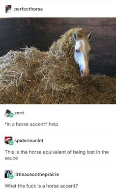 A Horse With A Horse Accent Being Lost In The Sauce #funny #meme