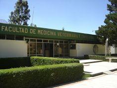 Universo Veterinaria: Facultad de Medicina Veterinaria y Zootecnia