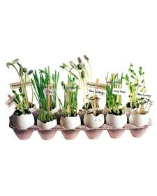 Eco Friendly Crafts  mini herb garden maybe for preschoolers.  I'll use something besides eggs, because of allergies.