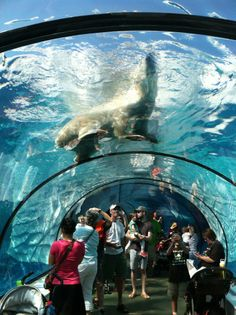 Detroit zoo.It is amazing in that tunnel! Saw the polar bear swimming his laps one morning. That's what the lady from the zoo told me