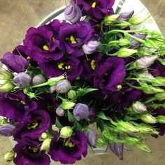Lisianthus...really great purple called 'Violet Piccolo'. sold in bunches of 10 stems from The Flowermonger, the wholesale floral home delivery service.
