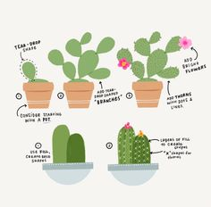 How To Draw Cacti & Succulents