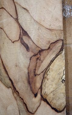 spalted mango wood board great color and heavily contrasted