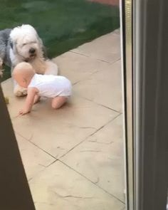 Alaruine see what's new today ?: cute baby play with cute dogs