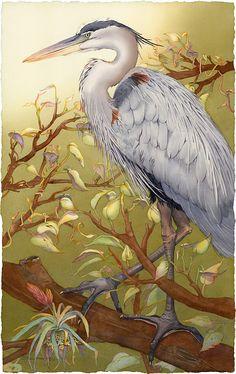 I'm Lookin' Good, Too (Great Blue Heron) by Barbara Groenteman Watercolor ~  x