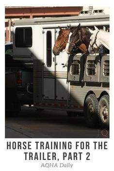 If you travel with your horses often, knowing tricks to get them loaded easily in the trailer will make your and their lives easier. Animals And Pets, Cute Animals, Horse Behavior, Horse Training Tips, Types Of Horses, Cute Horses, Horse Quotes, Horse Trailers, Horse Care