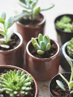 How To Repot Succulents - See more at: http://worldofsucculents.com/how-to-repot-succulents