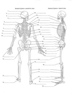 anatomy labeling worksheets - Google Search