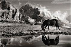Photo Black beauty by Darko Geršak on 500px