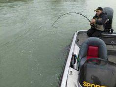 Momento de captura de um peixe gigantesco