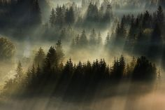 In that brief window of time when the foggy remnants of night clash with the rays of early morning sun, photographer Boguslaw Strempel positions himself atop high mountain peaks to capture these beautiful landscapes around Poland and the Czech Republic. Fog Photography, Morning Photography, Stunning Photography, Creative Photography, Landscape Photography, Photography Series, Foggy Mountains, Foggy Forest, Misty Forest