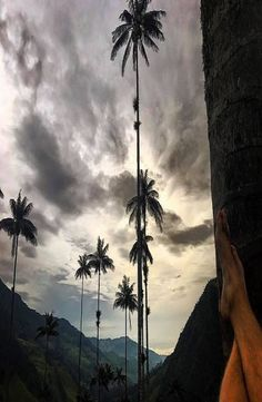 The beautiful Cocora Valley is located in the middle of three big columbian cities: Bogotá, Medellín and the capital of salsa, Cali. Cheap Web Hosting, Palm Trees, Sunset, World, Pictures, Outdoor, Beautiful, Colombia, Palm Plants