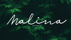 Malina Free Hand Script Font