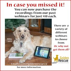 "LAST CHANCE! We are offering three more recordings from our past Webinars. You can purchase ""Grooming - Just in time for mud season"", ""Listening with your eyes - An introduction into the world of canine language"" and ""Bake some doggy treats"". These Webinars are available for just $10 each, or buy all three for a special price of $25! Offer expires TODAY! Please email events@goldenrescue.ca to order. #virtualevent #rescuedog #adoptdontshop #goldenretriever Rescue Dogs, Mud, Past, Swag, Language, Events, Canning, Past Tense, Languages"