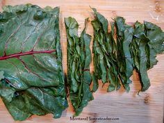 how to preserve beet greens by blanching and freezing Montana Homesteader