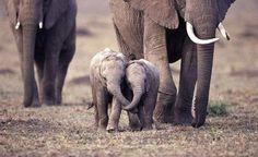 Baby elephants! Need I say more?