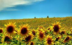 Afbeeldingsresultaat voor background summer images