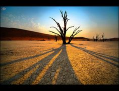 Dead Vlei, Sossusvlei, Naukluft Park, Namibia BelAfrique - Your Personal Travel Planner www.belafrique.co.za