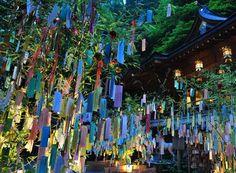 イメージ0 - 七夕♪・・・短冊に願いをこめて風ひとつ・・・の画像 - 野の花のお気楽日記 - Yahoo!ブログ