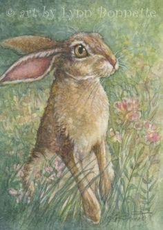 """Jack Rabbit  """"A very handsome Jack Rabbit visits the meadow  in hopes of finding something yummy to munch on."""""""