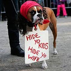 30 Pets in Halloween Costumes [Photos] : CollegeCandy – Life, Love & Style For The College Girl
