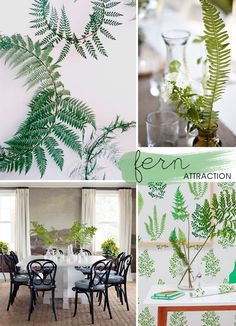 Fern attraction