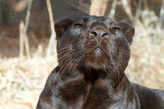 Eddy basking in the sun... Wildlife Animal Sanctuary