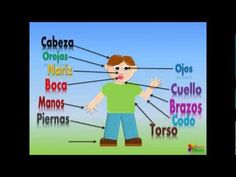 Las Partes Del Cuerpo Para Niños, Our Body Parts In Spanish For Children...