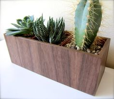 """Desktop Plant Holder, Planter for Succulents, Cacti, or Air Plants in WALNUT wood, roughly 8""""x3""""x3"""", air plants available for added cost"""