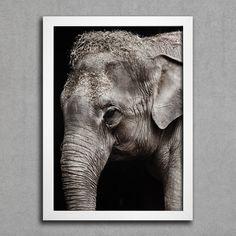 Elefante - Comprar em Encadreé Posters
