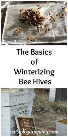 The Basics of Winterizing Bee Hives with Sensible Gardening. How to prepare your bees for winter. Drone Bee, Working Bee, Honey Bee Hives, Honey Bees, Beekeeping For Beginners, Raising Bees, Raising Chickens, Bee Boxes, Bee Hives Boxes