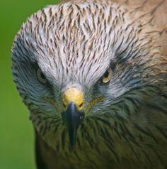 https://flic.kr/s/aHsiNgNdZo | Aves | A estos animales los distinguimos fácilmente porque son los que tienen plumas. En realidad son las plumas en lo que se basan los científicos para decidir si un animal es un ave o no. Si tiene plumas: es un ave. Si no tiene plumas: entonces no es un ave. Sólo las aves tienen plumas, y todas las especies de aves tienen plumas.  Al igual que los reptiles, anfibios, mamíferos y peces, las aves son animales vertebrados. Simplemente quiere decir que tienen…