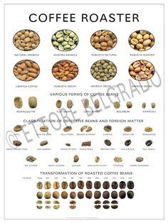 POSTER Kunstdruck COFFEE ROASTER roasting defects beans BARISTA | eBay