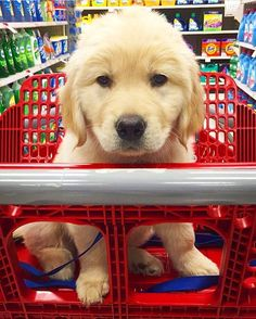 Getting some weekend shopping done