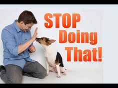 """How, When and Why I say """"NO"""" to my dogs. - YouTube"""
