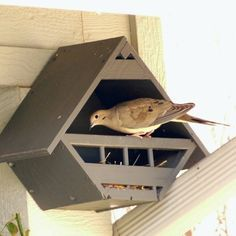 Open box robin bird house plans birdhouses pinterest for Dove bird house