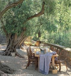 Outdoor dining under tree rustic