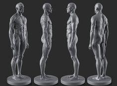 Male Anatomy Figure - 002